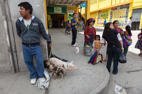 Pig Seller on corner of street, Guatemala.