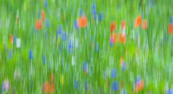 Cheerful Meadow.