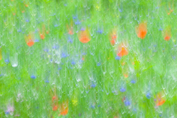 Impressions of a summer meadow.