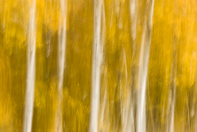 Impressions of Yellow