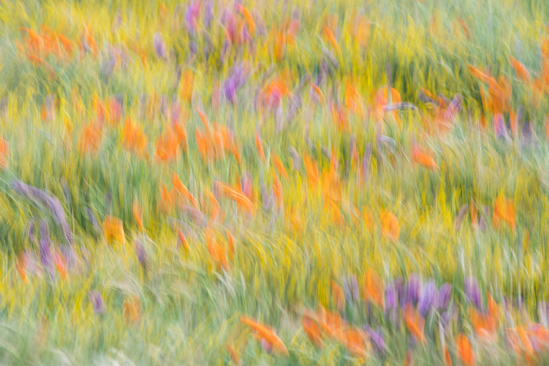 Wind in the Wildflowers