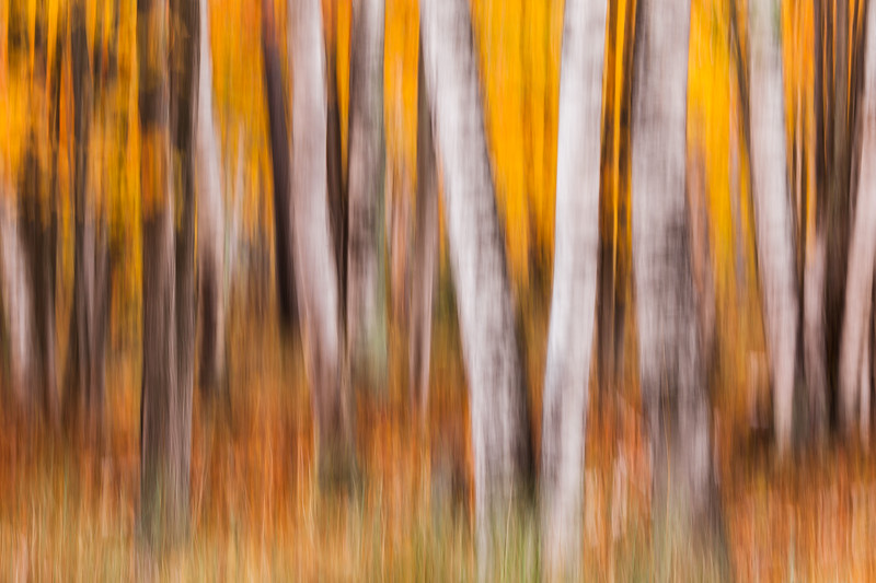 Forest Impression #2