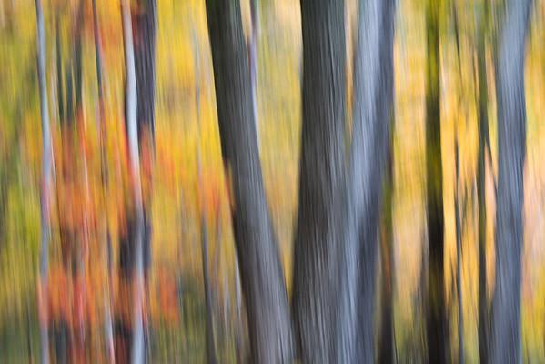 Impression of Autumn, Maine.