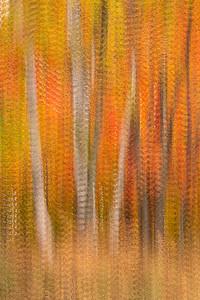 Autumn's Hues