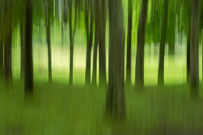 Forest Impression in Green