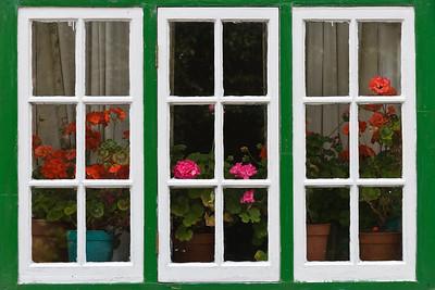 Windows and Geraniums