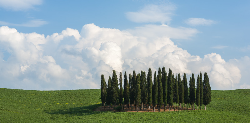 Famous Cypress grove in Tuscany, Italy.