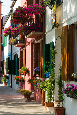 Flower-filled Village Lane, Burano, Italy.