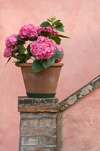 Pink Geraniums and Wall, Italy.
