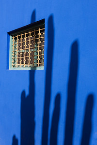 Blue wall and cactus shadow, Marjorelle Gardens, Marrakech, Morocco.