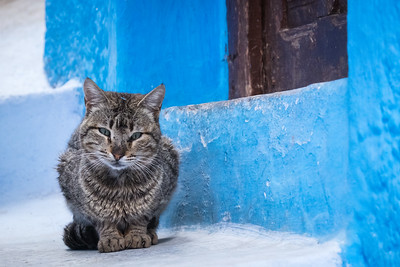 Kitten in Chefchaouen.