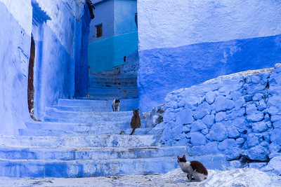 Africa, Morocco, Chefchaouen. Cats sit along the winding steps of an alley.