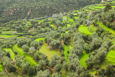 Spring in the Moroccan countryside.