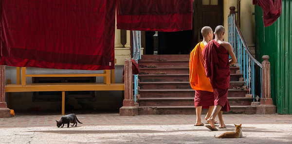Monks and cats in courtyard, Mahagandayon Monastery, Mandalay, Myanmar.