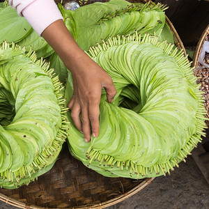 Betel Leaves for Sale, Myanmar.