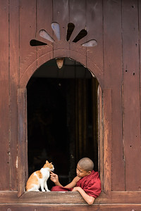 Young monk and cat in window, Myanmar.