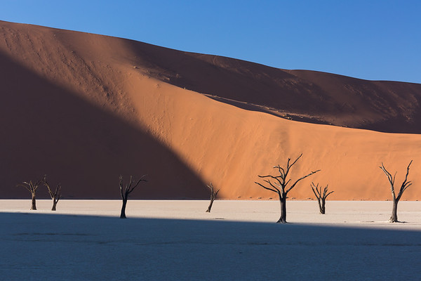 Trees, Dunes and Shadows