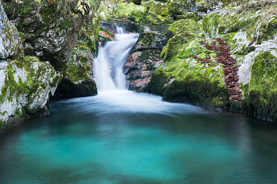 Pure Cascade in the Forest