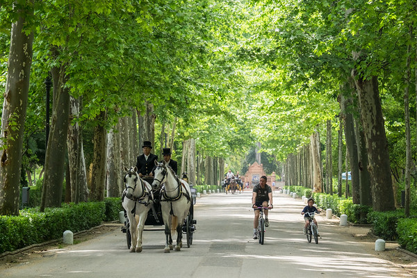 Cyclists and horse and carriage, Seville.
