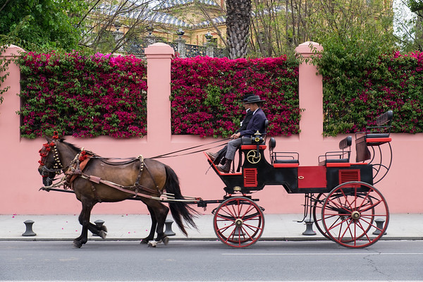 A horse and carriage, Seville.