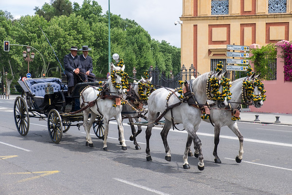 Horse and carriage on the streets of Seville.