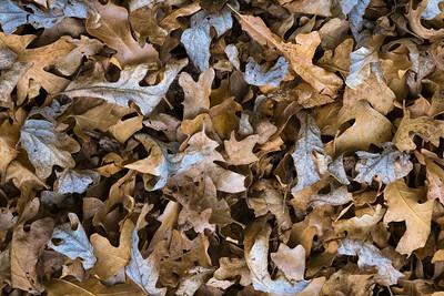 Last Year's Leaves