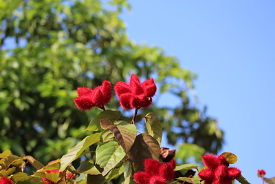 Unlabeled Now Fruit or Flower