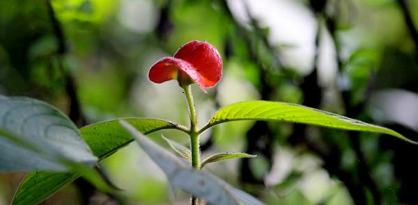Lips Flower