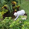 Gardener Cristian