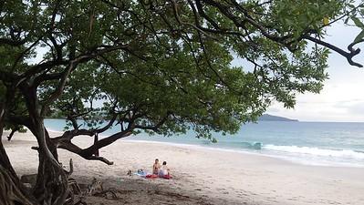 Shade Tree for the Beach