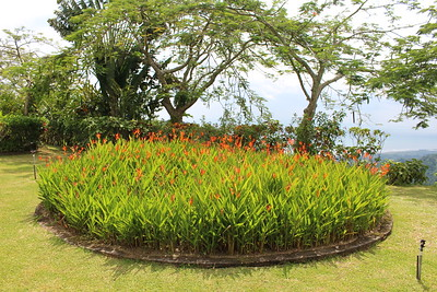 Heliconia Bed