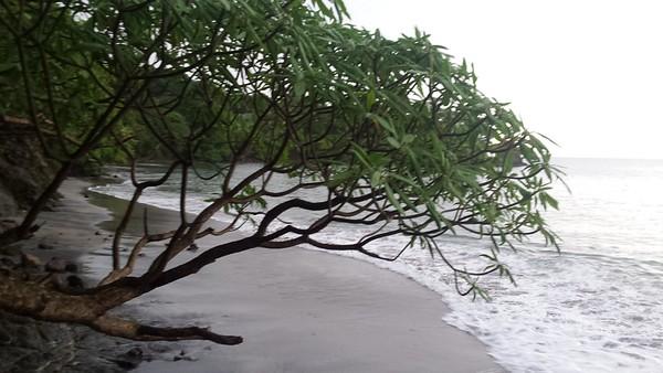 Tree on Hotel Dreams' Beach