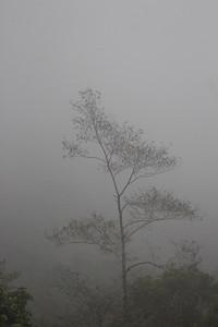 Cloud Forest Vistas