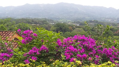 Bougainvillea Frame a Neighbor's View of Central Atenas