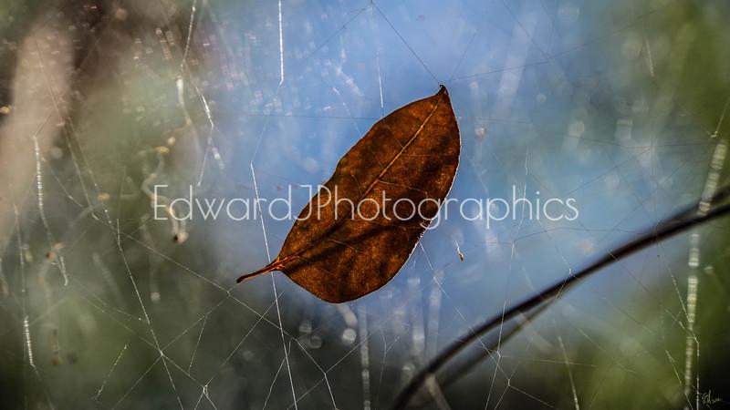 Caught in A Spiderweb...