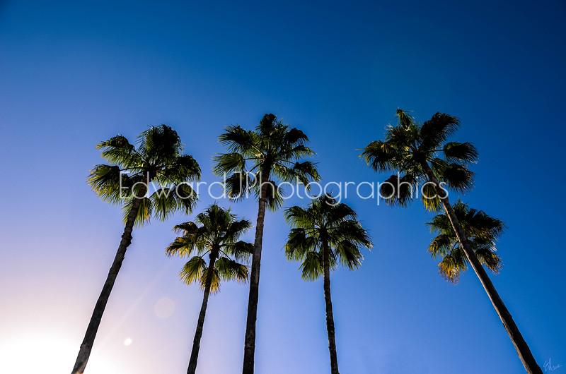 Wish Upon A Palm Tree ...