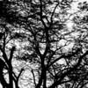Meditating Tree...