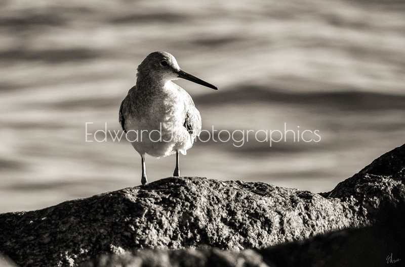 Bird On The Rocks...