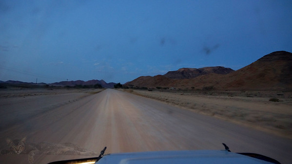 Early Morning Drive - Namibia