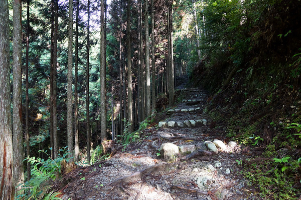 Kumano Kodo Trail in Kii Mountains