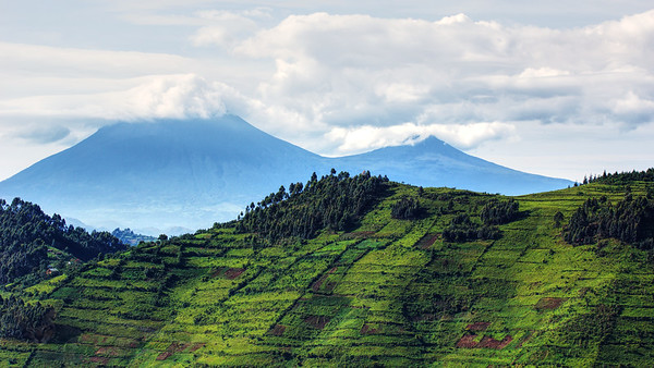Mountains in the Mist - Uganda
