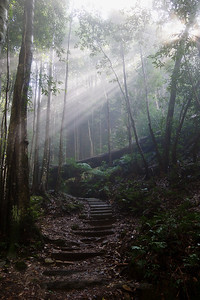 Walking in the Blue Mountains