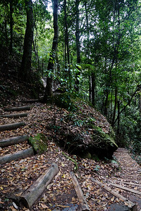 A Path in the Blue Mountains
