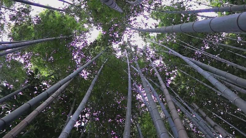 Arashiyama Bamboo Forest - Video #2