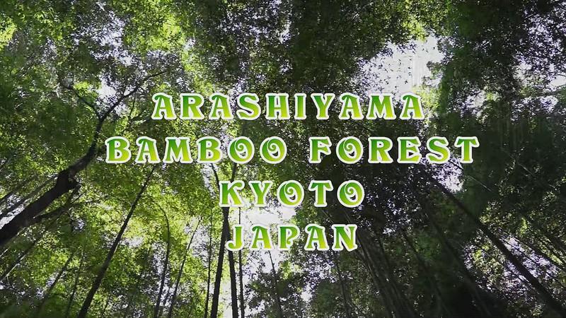 Arashiyama Bamboo Forest - Video #1