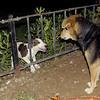 Dana (puppy), Maddie_001