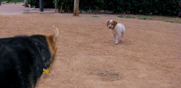 Chupi (puppy boy), Maddie