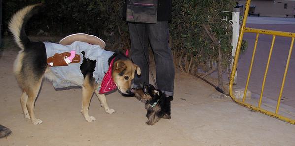 Maddie, cowgirl, costume, ayora