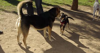 Maddie, Little dog_001