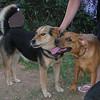 Woton (boy puppy),  Maddie_001